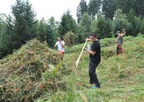 Naturschutzprojekt Schlingnatterschutz mit internationalem Jugendworkcamp Bild 03