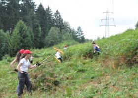 Naturschutzprojekt Schlingnatterschutz mit internationalem Jugendworkcamp Bild 02
