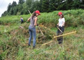 Naturschutzprojekt Schlingnatterschutz mit internationalem Jugendworkcamp Bild 01